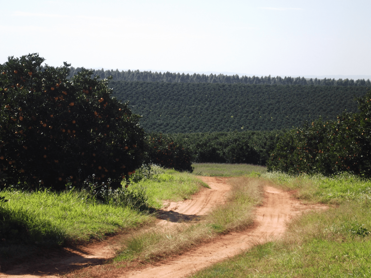 Tracks in field - Brazil - Governance of Labour and Logistics for Sustainability