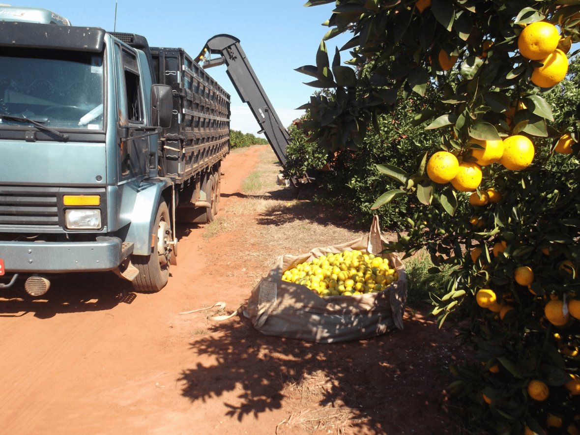 Picking oranges - Brazil - Governance of Labour and Logistics for Sustainability