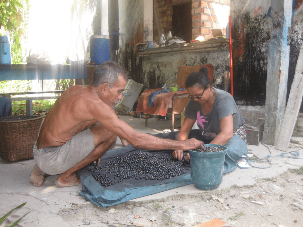 Sorting acai - Brazil - Governance of Labour and Logistics for Sustainability
