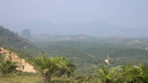 Palm plantations from hillside - Myanmar/Cambodia - MOSAIC project